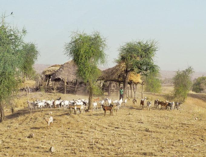 Noch bewohntes Gehöft in der Umgebung. Es ist nur eine Frage der Zeit, bis auch dieser Bauer und Selbstversorger dem Siedlungsdruck nachgibt und nach Korarit zieht, um künftig Plantagenarbeiter zu werden.