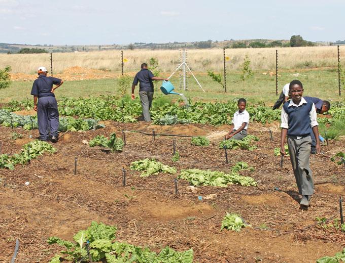 """...oder die Mitarbeit im Gartenprojekt: Schüler ziehen im Schulgarten eigenes Gemüse für den Privatverkauf und sorgen sich um das Wachsen und Gedeihen """"ihrer"""" Pflanzen."""