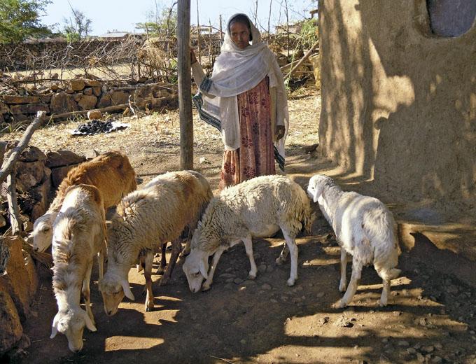 Kurs Tierzucht: Mit dem Startkredit hat diese Kursteilnehmerin zwei Schafe gekauft. Bereits nach einem Jahr ist sie stolze Besitzerin einer kleinen Herde.