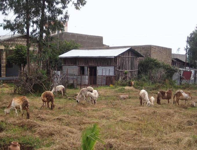 Mit der eigenen Demonstration Farm wird der theoretische Unterricht vertieft. Die Kursteilnehmerinnen lernen so anschaulich, wie Tiere sauber und gesund gehalten werden und wie man erfolgreich Züchtung betreibt.